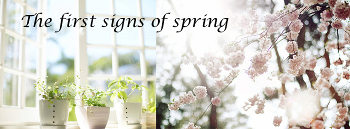 jlt-the-first-signs-of-spring1