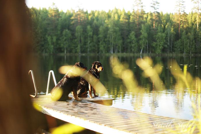 finnishmidsummer2013juhannusIMG_5394