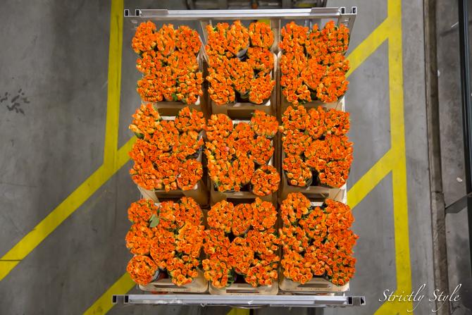 aalsmeer flower auction flora holland (1 of 39)