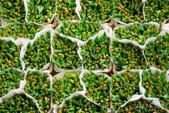 aalsmeer flower auction flora holland (17 of 39)