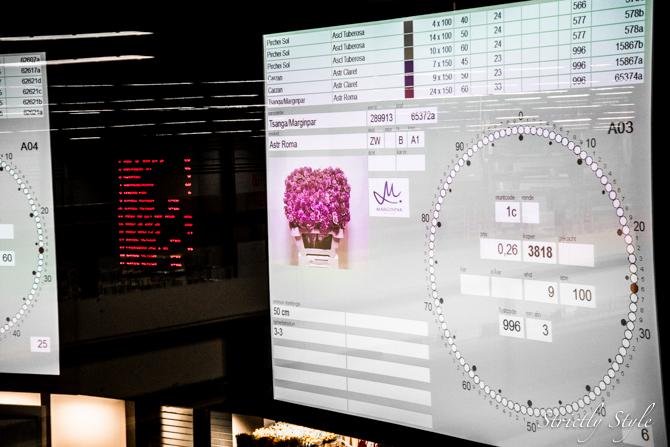 aalsmeer flower auction flora holland (24 of 39)