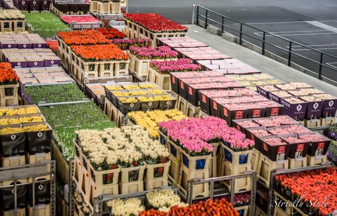 aalsmeer flower auction flora holland (27 of 39)