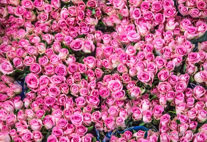 aalsmeer flower auction flora holland (29 of 39)