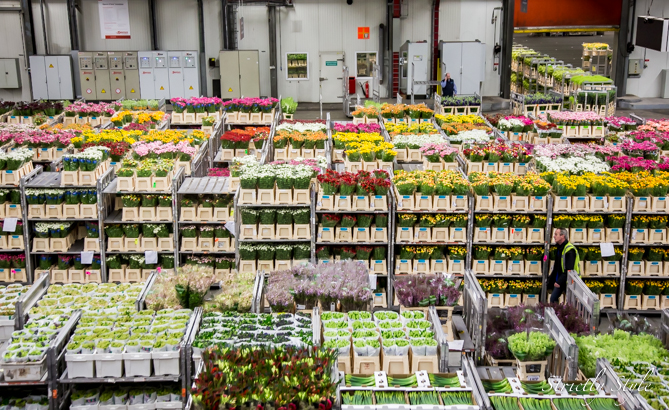 aalsmeer flower auction flora holland (6 of 39)