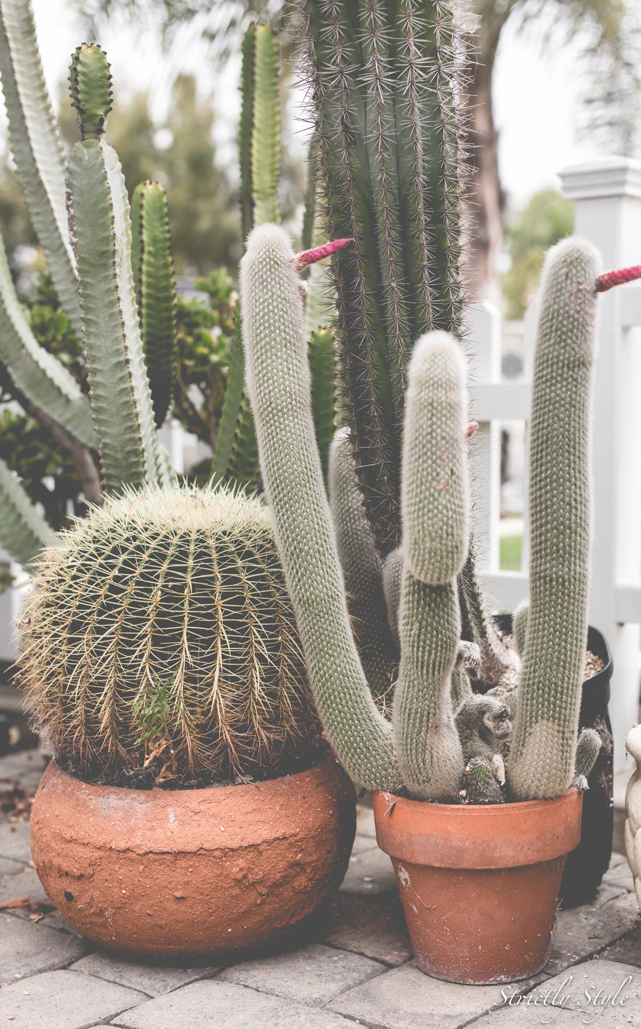 cactusandhanna-5016